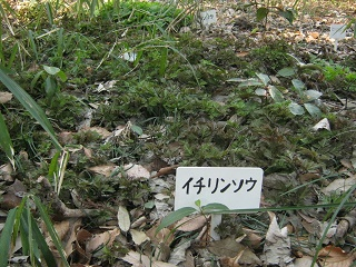 hurusato140323-212.jpg