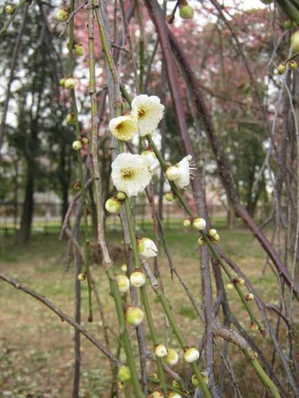oomiyadaini140223-104.jpg