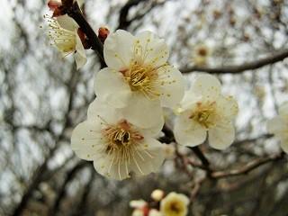 oomiyadaini140223-205.jpg