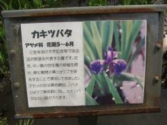 shakuzii140329-109.jpg