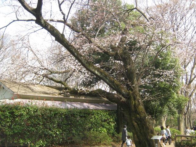 shakuzii140329-121.jpg