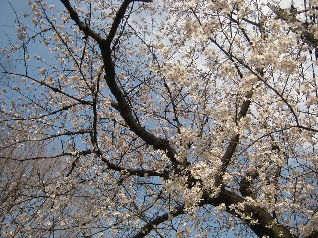 shakuzii140329-123.jpg