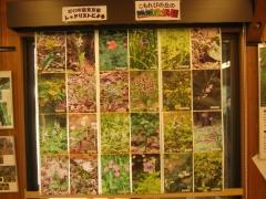 shouwakinen140413-133.jpg