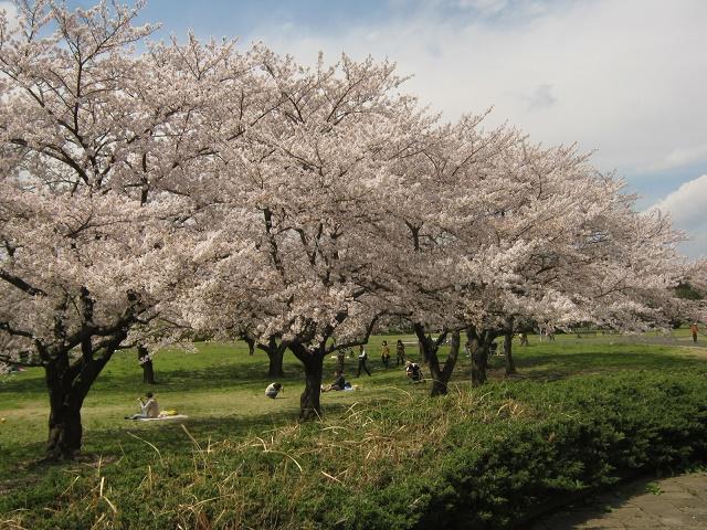 tazimagahara140406-114.jpg