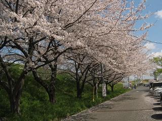 tazimagahara140406-201.jpg