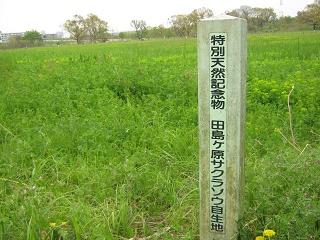 tazimagahara140419-201.jpg