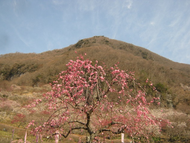 yugawara140309-106.jpg