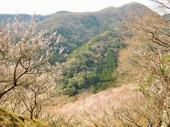 yugawara140309-113.jpg