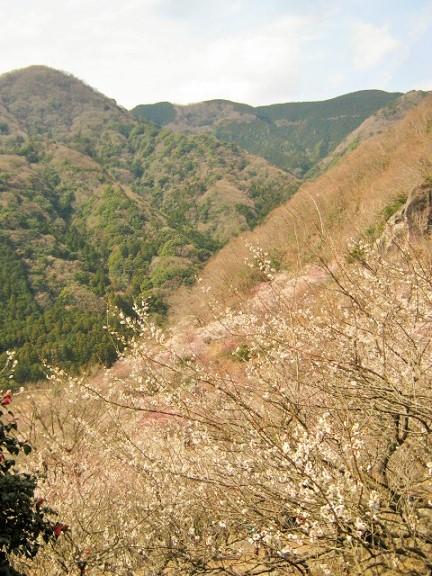 yugawara140309-114.jpg