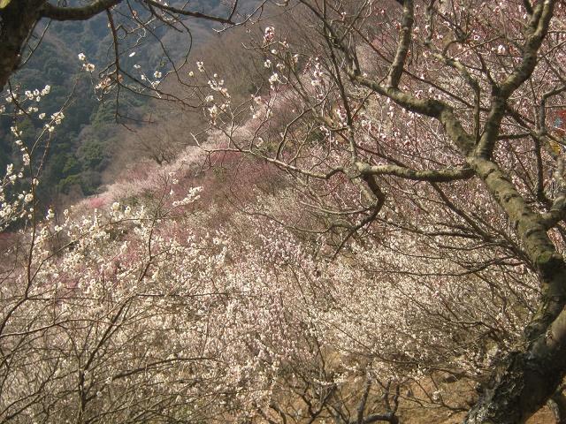 yugawara140309-119.jpg