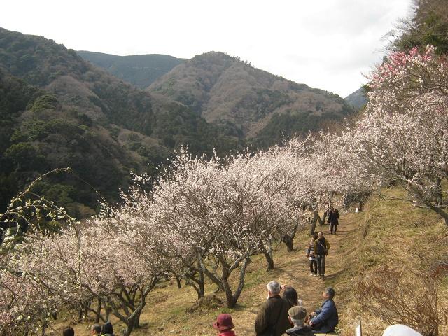 yugawara140309-121.jpg