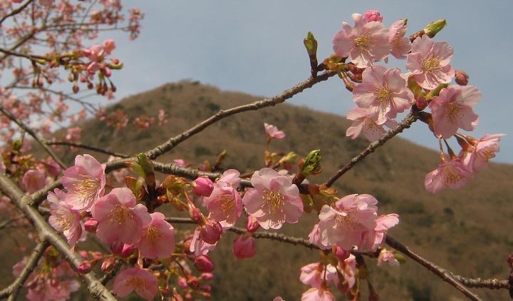 yugawara140309-123.jpg