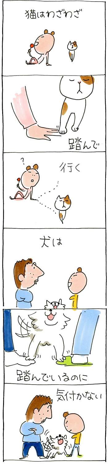 犬と猫の違い1