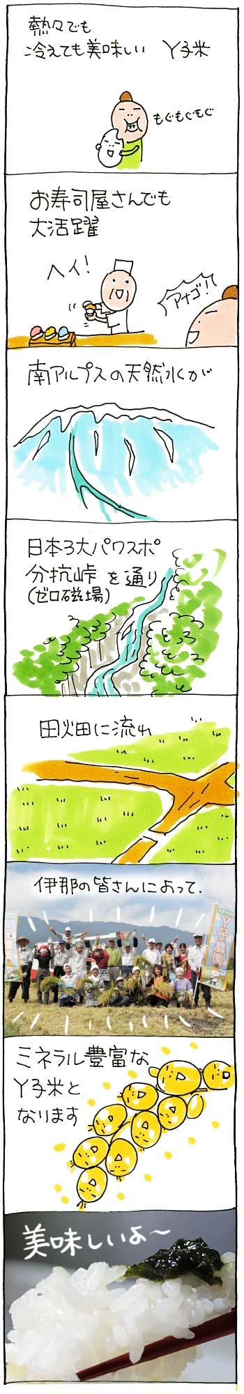 2014Y子米