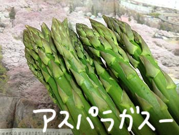 Y子農園オマケ5