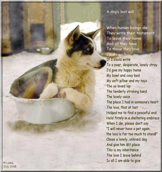 dogs-last-will1.jpg