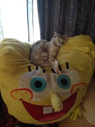 寝てばかりのるびー