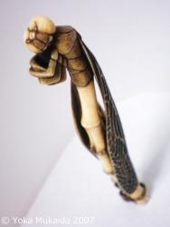 © 陽佳 2007「蜻蛉生まる」DH000025.jpg