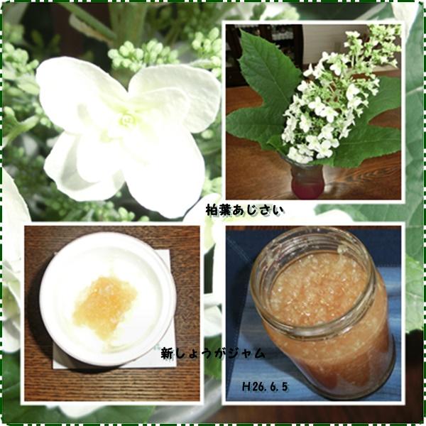 柏葉紫陽花&ジャム
