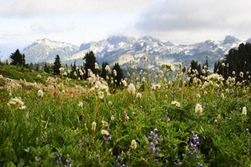 blog 116 Mt. Rainier, Skyline Trail, Flower Meadow, WA_DSC1787-8.6.14.(6).jpg
