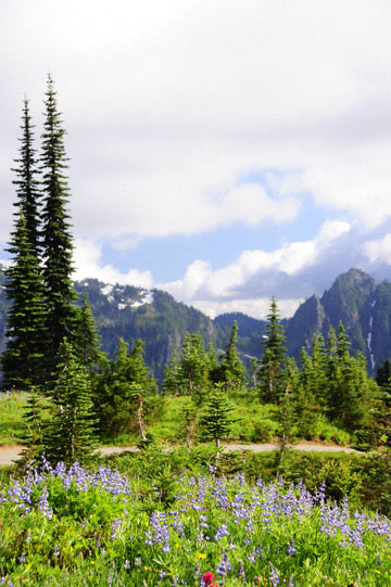 blog 116 Mt. Rainier, Dead Horse Creek Trail, Flower Meadow, WA_DSC1815-8.6.14.(6).jpg