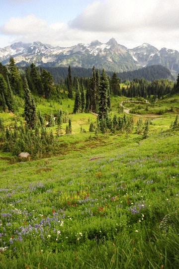 blog 116 Mt. Rainier, Dead Horse Creek Trail, Flower Meadow, WA_DSC1793-8.6.14.(6).jpg