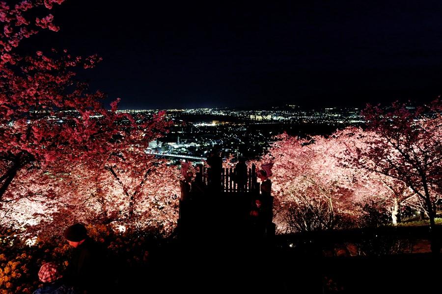 松田山夜桜0901