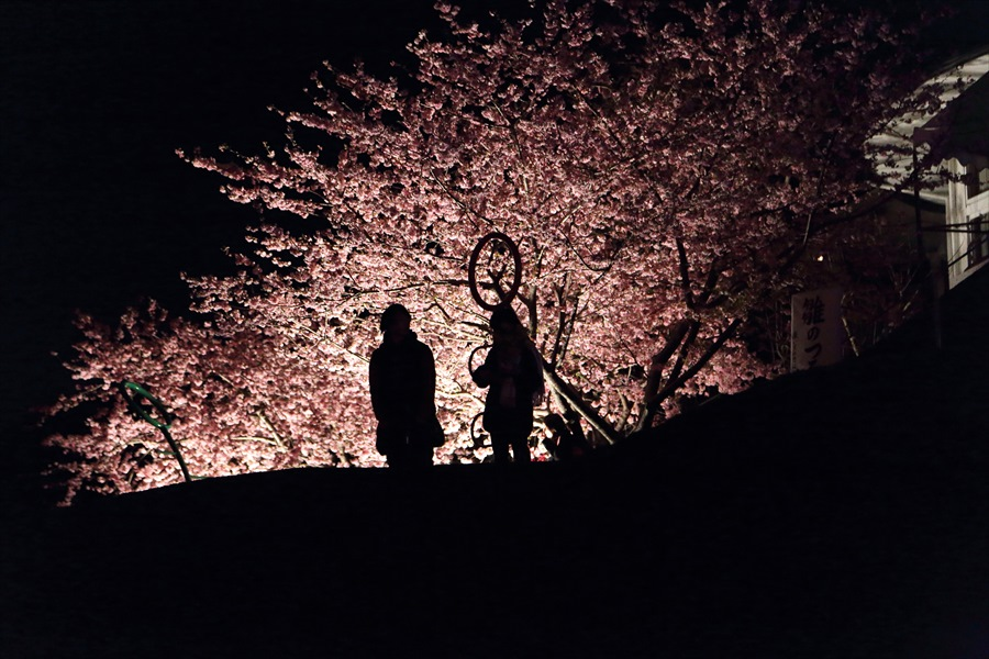 松田山夜桜0905