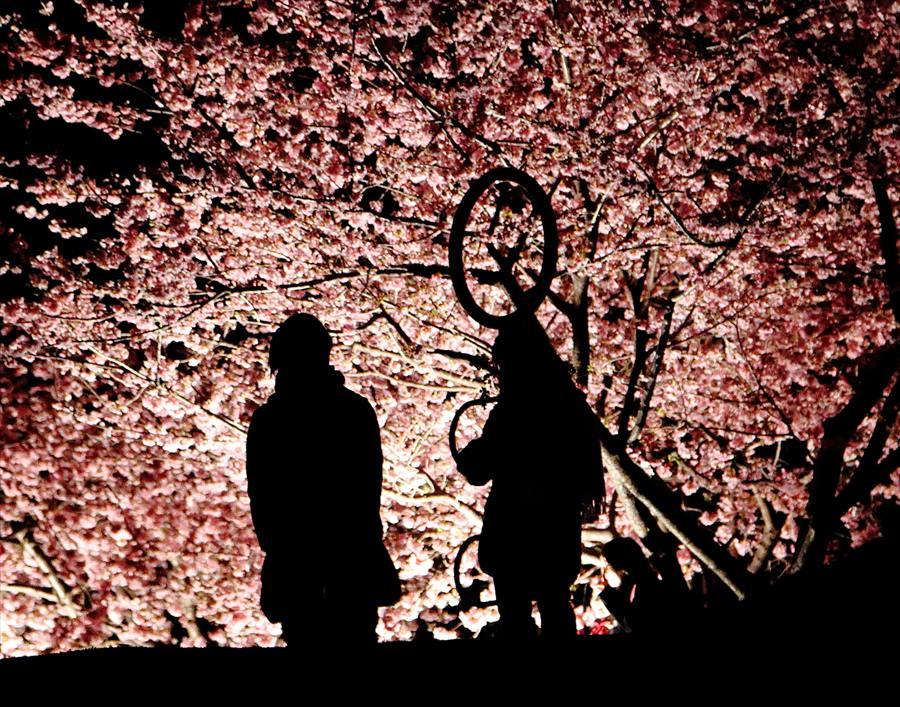 松田山夜桜0906