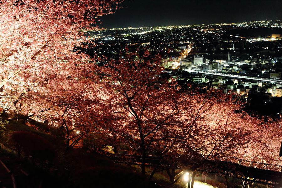 松田山夜桜1001