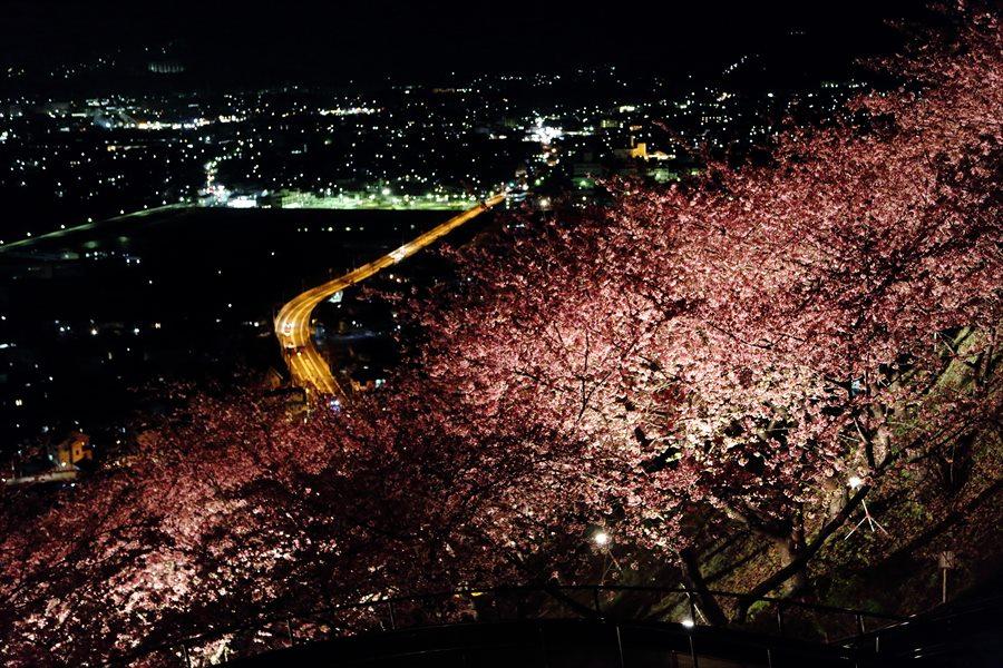 松田山夜桜1003