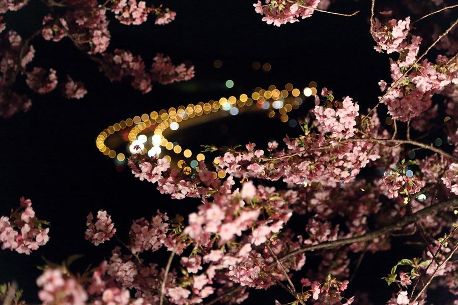 松田山夜桜1004