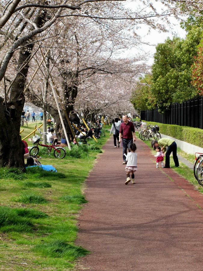多摩川桜0104
