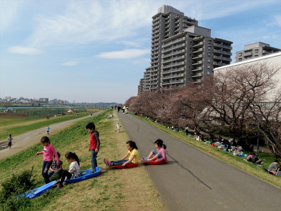 多摩川桜0203