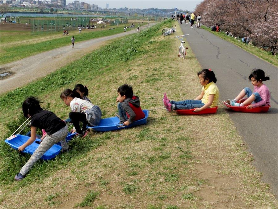 多摩川桜0204