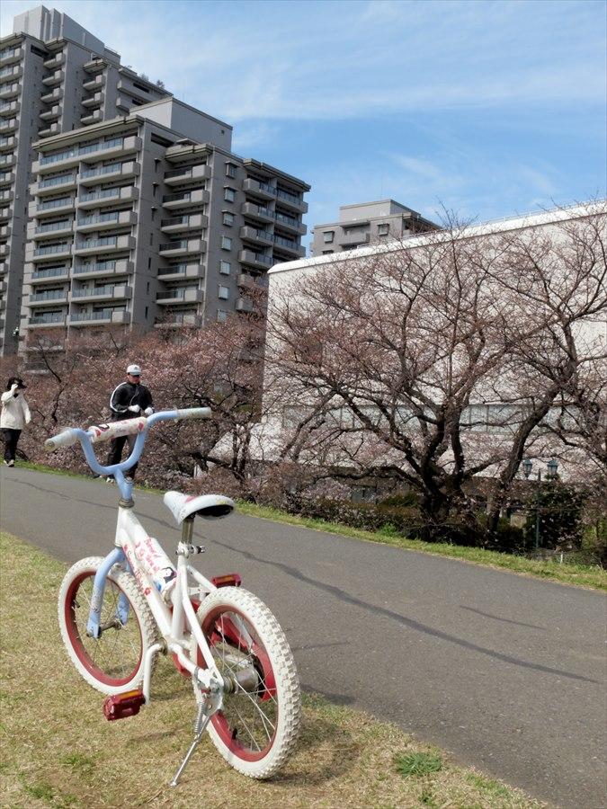 多摩川桜0205