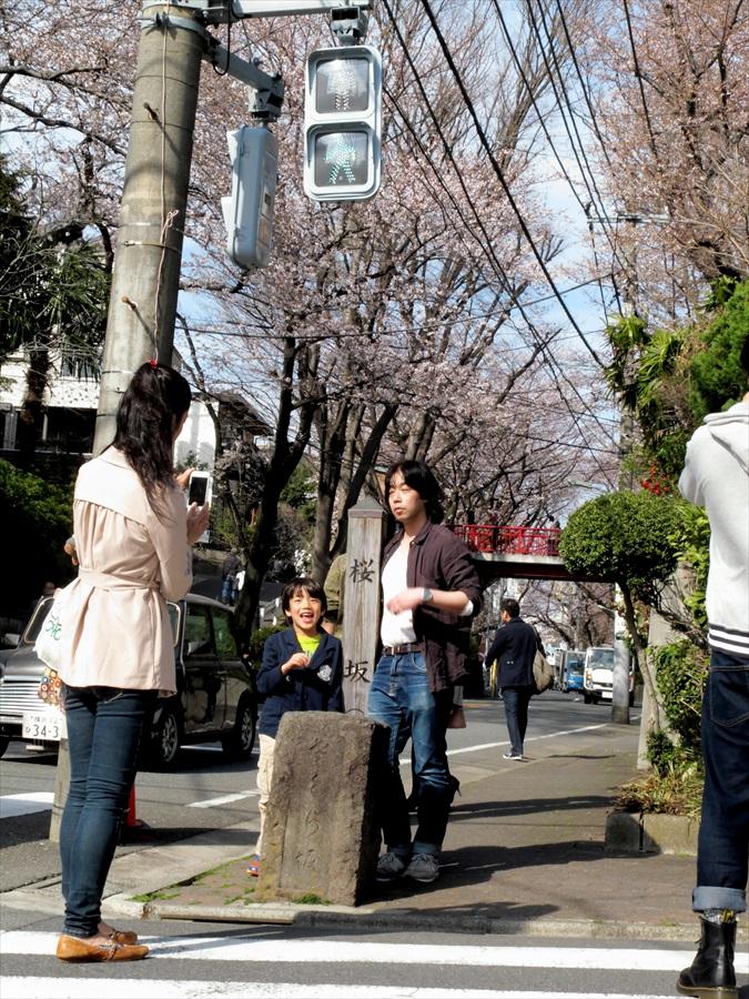 桜坂桜0101