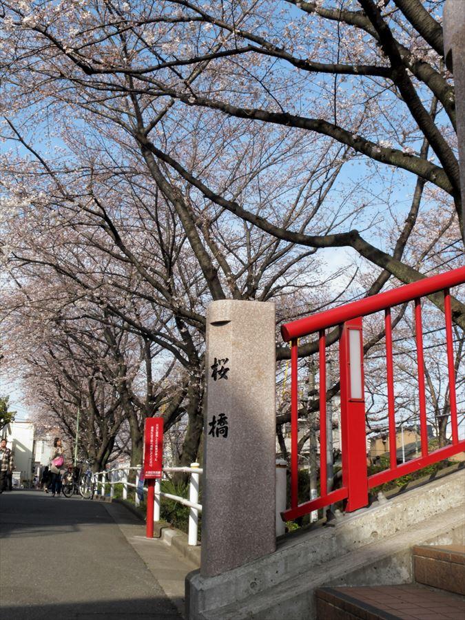 桜坂桜0105