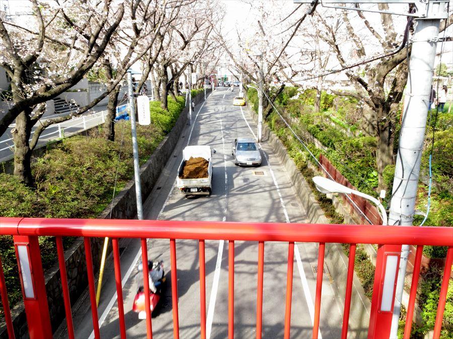 桜坂桜0201