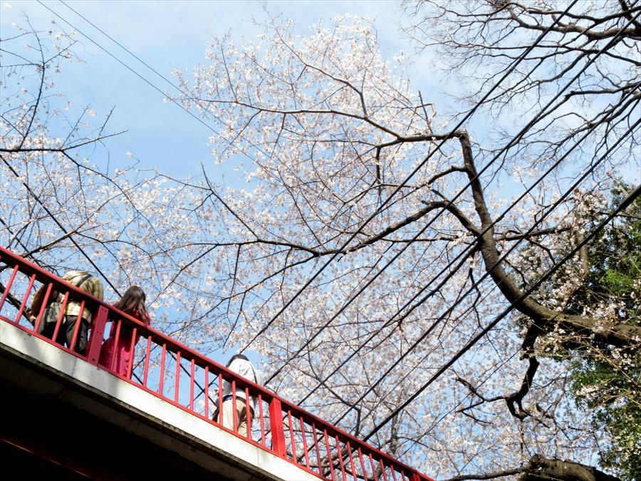 桜坂桜0205