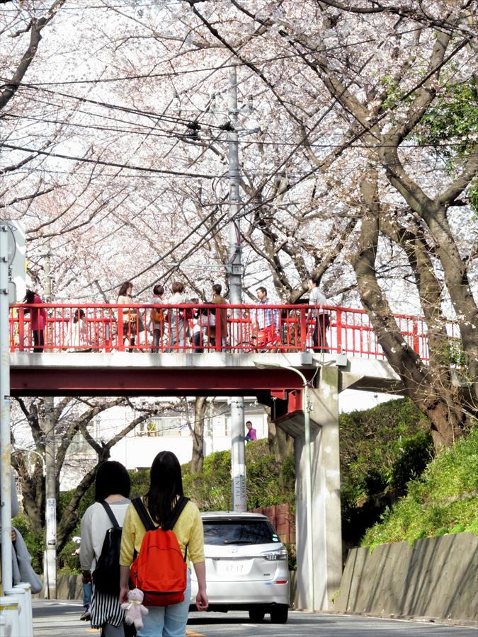 桜坂桜0206