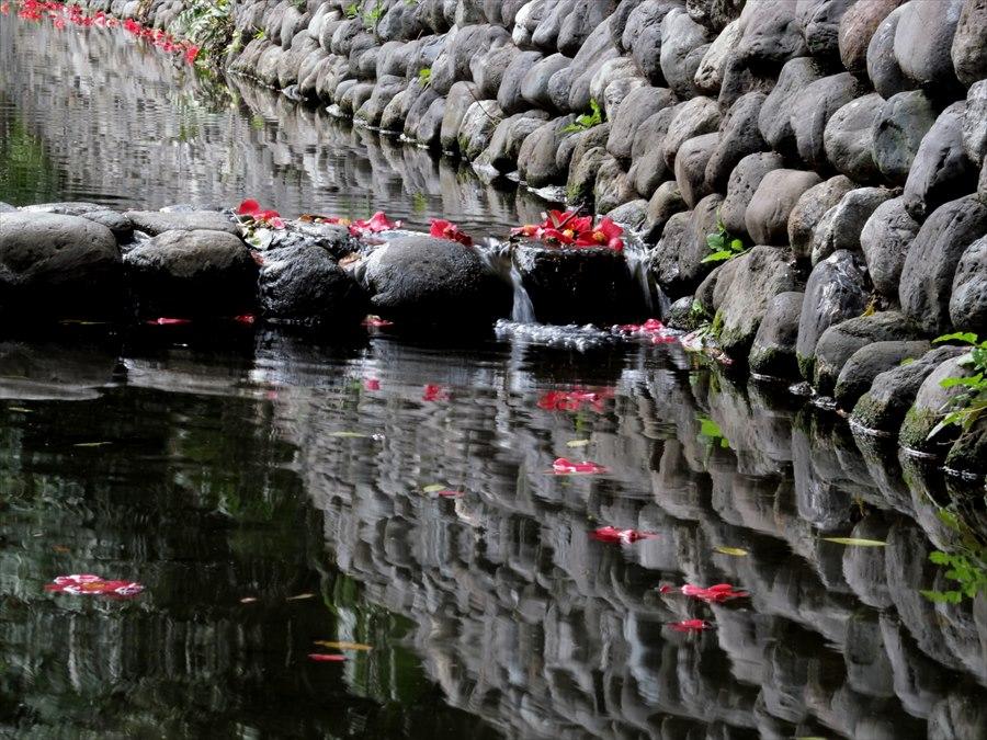 六郷用水桜0104