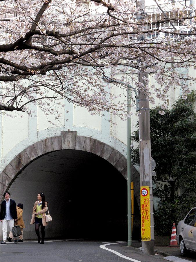 六郷用水桜0106