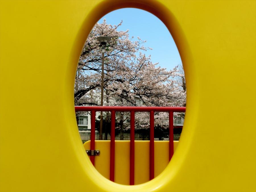 川崎桜05