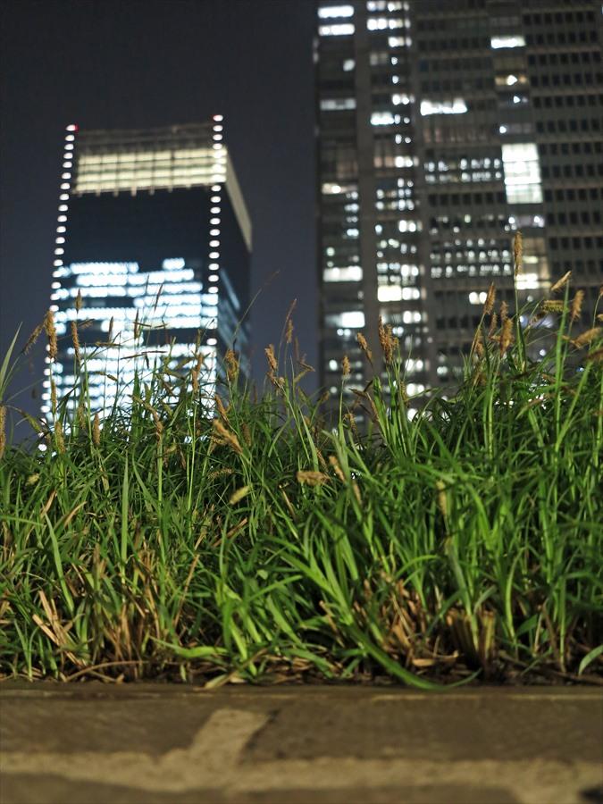 東京駅夜景」06