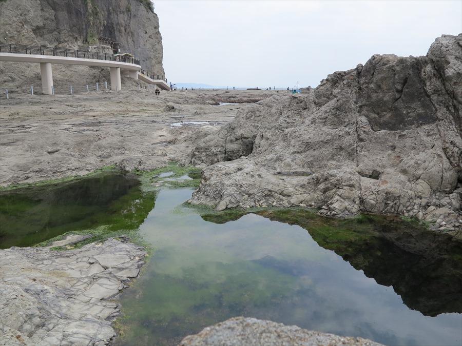 江ノ島岩棚0602