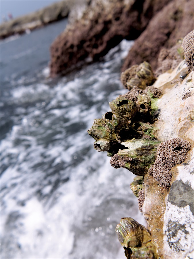 江ノ島0506