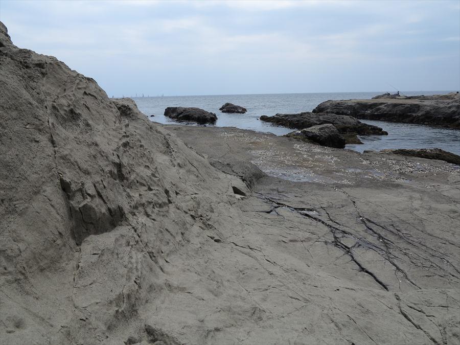 江ノ島岩棚0605