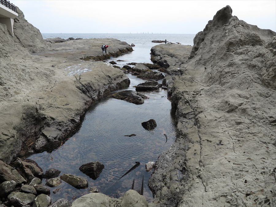 江ノ島岩棚0606