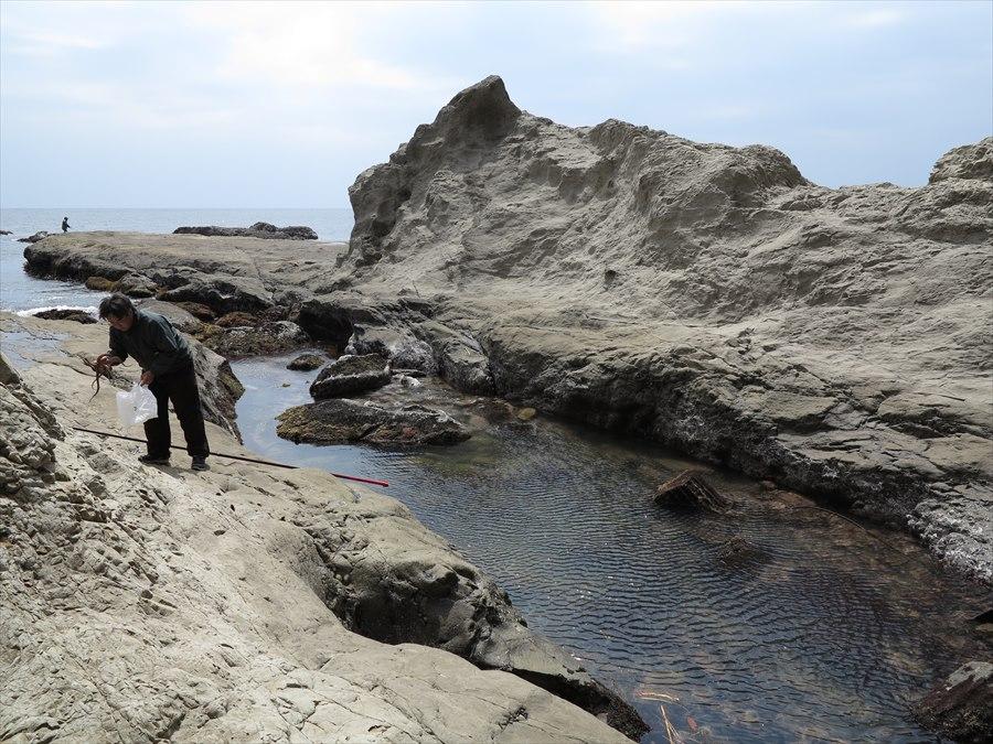 江ノ島岩棚0609